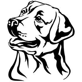Labrador matrica