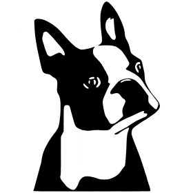 Boston terrier matrica