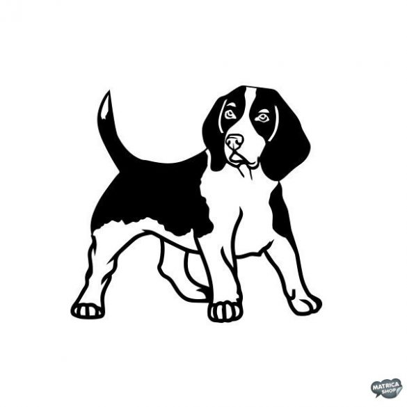 Beagle matrica 2