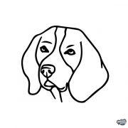 Beagle matrica 4