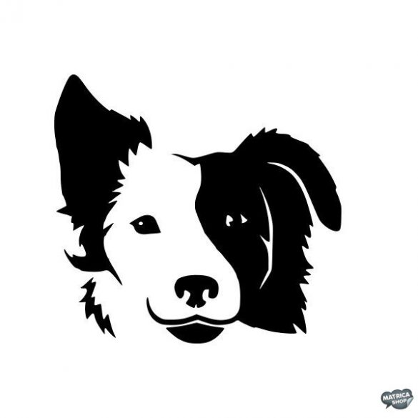 Border collie matrica 1
