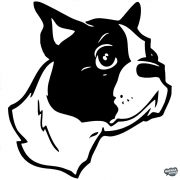 Boston terrier matrica 0