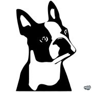 Boston terrier matrica 2