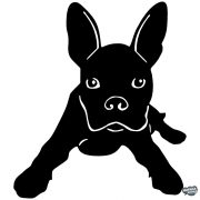 Boston terrier matrica 3