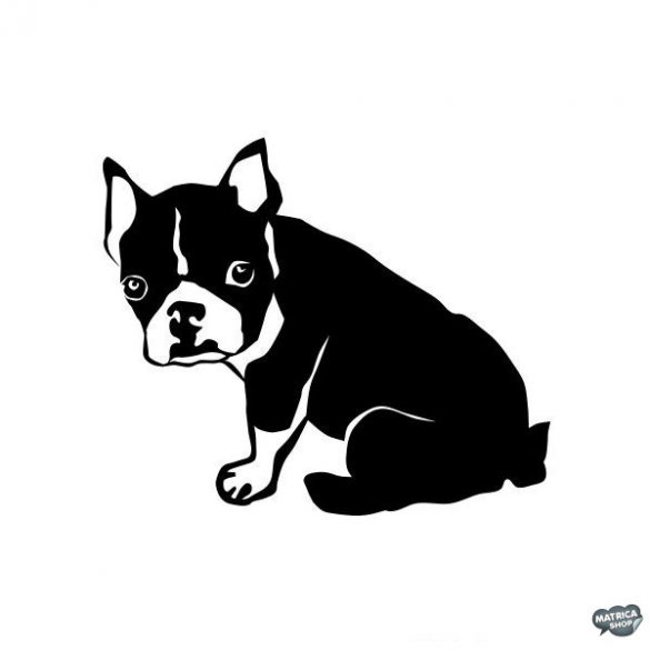 Boston terrier matrica 8