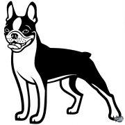 Boston terrier matrica 12