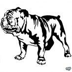 Bulldog matrica 3