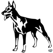 Dobermann matrica 5
