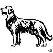 Labrador matrica 1