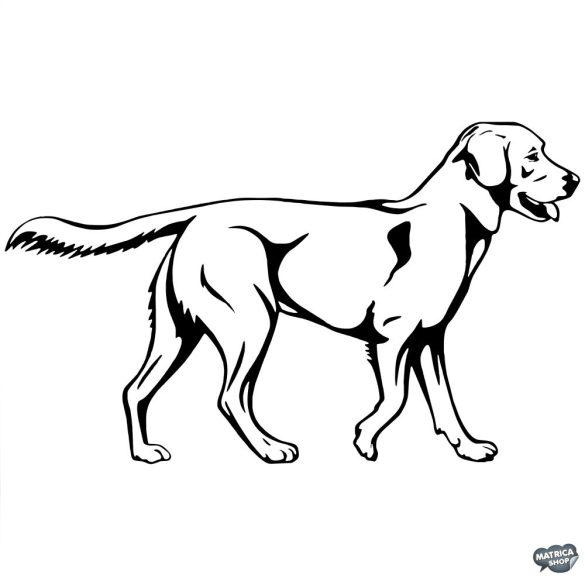 Labrador matrica 3