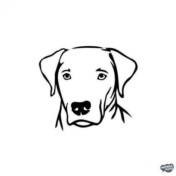 Labrador matrica 10