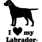 Labrador matrica 11