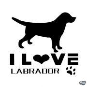 Labrador matrica 12