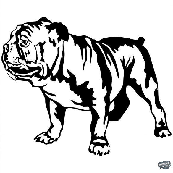 Angol bulldog matrica 8