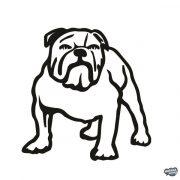 Angol bulldog matrica 13