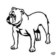 Angol bulldog matrica 15