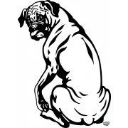 Boxer matrica 13
