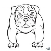 Bulldog matrica 18