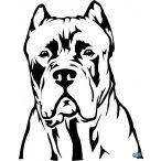 Cane corso matrica 7