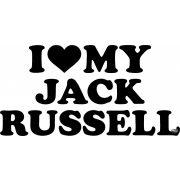 Jack Russel terrier matrica 8