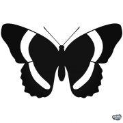 Pillangó matrica 6