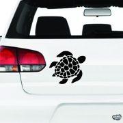 Teknősbéka gazdag páncéllal